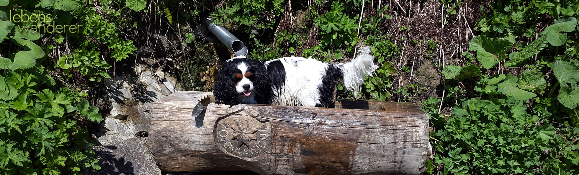 Tiergespräche - Hundesitting - Hundewanderungen